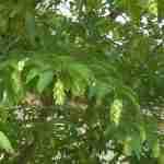 bijzondere heester of boom voor de tuin in tuinplan florera.nl
