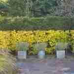 Tuin weergaloos mooi tijdens jaarrond met bijzondere heester en hagen