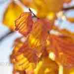 Jaarrond weergaloze kleuren in de tuin met bijzondere heester of boom- tuinsfeer