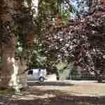 150 jaar oude beuk in villatuin Eindhoven
