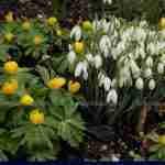 Marjan de Koning tuinontwerper en beplantingsplan