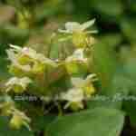 vrolijke kleurtjes in de voorjaarstuin met vroege bloei- florera tuinontwerp beplantingsplan