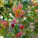 Tuinontwerper Marjan de Koning werkt in haar beplantingsplannen met vrolijke kleurtjes in de voorjaarstuin