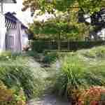 koi vijver, dakbomen, siergrassen, strakke en wolkhagen in moderne hedendaagse tuin