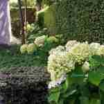 ontwikkeling van de tuin met hortensia planten bij witte tuinmuren achter spiegelvijver