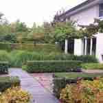 ontwikkeling in de tuin en contrastrijk groen - florera tuinen ea. buitenruimtes