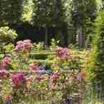vakkundig tuinadvies online door tuinontwerper