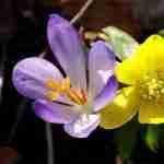 een tuinplan van florera tuinontwerper geeft pas echt plezier tijdens voorjaar in de tuin