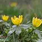 tuinplan van Florera geeft genieten tijdens voorjaar in de tuin