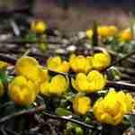 Een beplantingsplan via Florera tuinontwerper regio Eindhoven