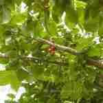 balans en harmonie in grote boerderijtuin met eetbare vruchten