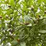 eetbare vruchten in grote boerderijtuin na tuinplan Marjan de Koning tuinontwerper