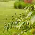 eten uit eigen tuin- villa boerderijtuin