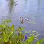 natuurlijke grote vijver om in te zwemmen in eigen tuin