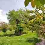 Landschappelijke tuin inrichten