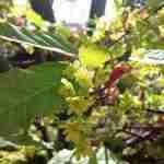 Florera ontwerpt landelijke tuinen in diverse tuinstijlen
