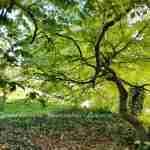 Een beheerplan als extra hulp om van je tuin een droomtuin te maken- florera tuinontwerp