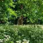 Exclusieve landelijke tuin met boszoom- florera.nl