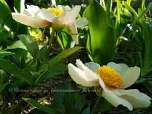 Zachte bloeikleuren in landelijke tuin- laat u inspireren door florera.nl
