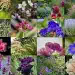 schoonheden in de tuin verwerkt in een exclusief beplantingsplan voor landelijke tuin die luxe uitstraalt- florera.nl