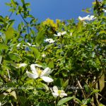 Florera ontwerpt sinds 22 jaar exclusieve tuinen in een breed assortiment tuinstijlen