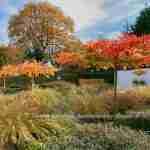 Herfsttuin- tuin herfst na tuinontwerp Marjan de Koning Heeze