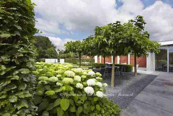 Marjan de Koning maakt graag een doordacht tuinplan voor u voor een nieuwe tuin