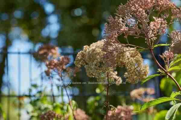 een bloemborder in een nieuwe tuin waar bloemen ook mooi zijn als ze uitgebloeid zijn- Marjan de Koning tuinontwerper Florera