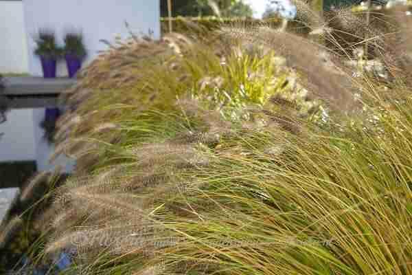 Zonlicht op ieder moment van de dag laten ons genieten van de tuin- een nieuwe tuin ontwerpen kent veel facetten- florera.nl