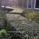 Een karkas van groenblijvende planten laat ons genieten tijdens alle seizoenen in de tuin- florera.nl