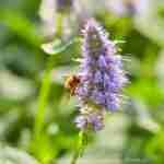 meer biodiversiteit in toekomsttuin via tuinplan florera.nl