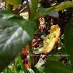 de tuin in de lente tijdens zomer klaar maken - Marjan de Koning tuinontwerper florera.nl