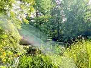 natuurlijke vijver in grote parktuin