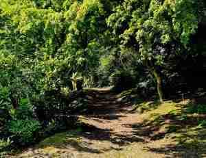 wandelen in eigen grote parktuin met natuurlijke vijver